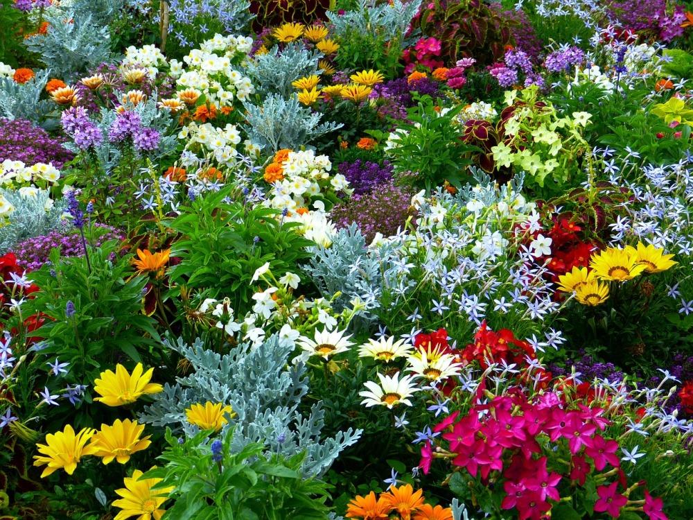 Plante perene de vara cu flori multicolore
