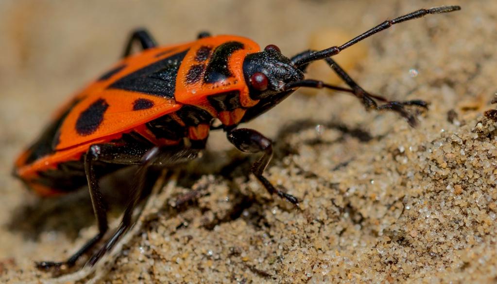 Ciudatenii despre lumea uimitoare a insectelor