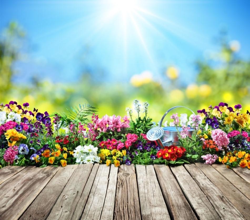 Aranjamente florale inedite pentru gradina, cu flori care nu necesita o ingrijire speciala